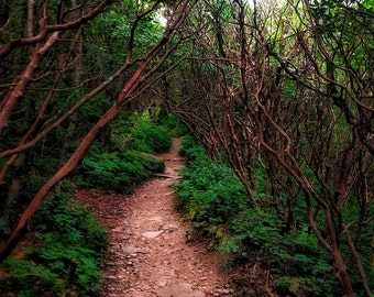 Fine art photograph of a hidden forest trail