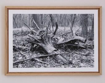 Flood Remnants - Black & White Framed Photograph - One of a kind