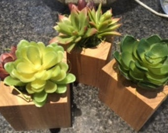 Set of three Succulents in Wooden cubes Home Decor/ Wedding Favor
