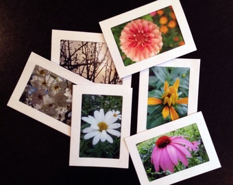 Mixed Set of 6 Nature Photograph Blank Note Cards