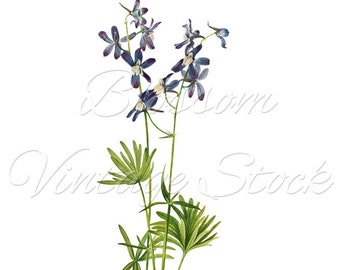 Blue Flowers Botanical Print, Flower Clipart, Digital Image, Vintage Illustration for Print, Digital Artwork - INSTANT DOWNLOAD - 1643