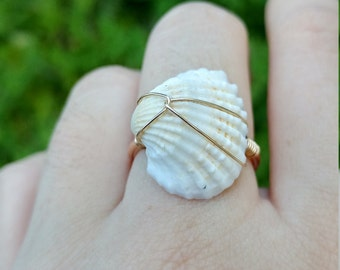Real Seashell Ring | Goldfield | Sterling Silver | Unique | Real Seashell | Seashell | Beach | Ocean | Sea | Ring | talia luvaton jewelry