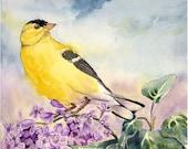 Bird Art - PRINT of a Watercolor Painting - American Goldfinch wildlife nature animal art nature art - 8 x 10