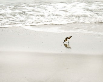 Sandpiper Wall Art, Bird Photography, Shorebird, Beach Print