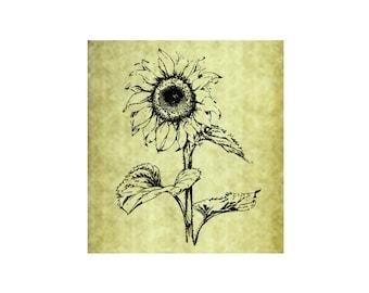 SUNFLOWER Rubber Stamp~Large Cling Stamp~Summer Flower~Sunshine~Pattern~Thanksgiving~Fall~Autumn~Mountainside Crafts (54-13)