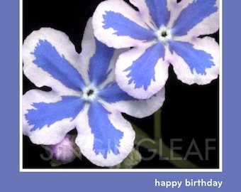 Birthday Blossoms Cheery Smiling Faces Flower Photography by Singing Leaf