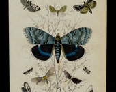 1850 Antique BUTTERFLY print, hand colored multicolored butterflies, insects, original antique