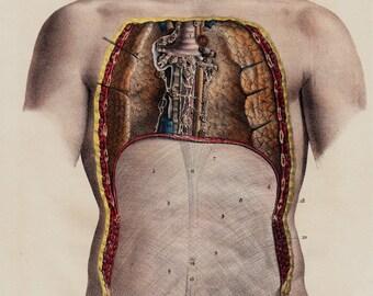 Antique print, 1844 Antique ANATOMY print by Lemercier, fine lithograph of a open chest, insides, Original antique lithograph