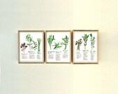 Set of 3 vietnamese herb prints, 8X10 print, Watercolor painting, Green kitchen decor, Herb poster, Medicinal herbs, Botanical art, Wall art