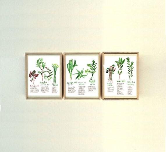 Set Of 3 Vietnamese Herb Prints 8X10 Print Watercolor