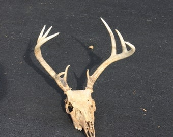 Vintage Deer Antlers And Skull Authentic Deer Skull Animal Skull Weathered With Antlers 9 Point Lodge Cabin Rustic Barn Farm Decor