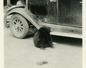 "Vintage Photo ""Black Bear Encounter"" Wild Animal Girl Car Snapshot Old Photo Black & White Photograph Found Paper Ephemera Vernacular - 207"