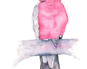 Galah watercolour painting, G11316, A3 size, Galah print, parrot watercolor painting, Australian bird watercolour, parrot painting