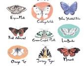 British Butterflies and Moths A3 Art Print