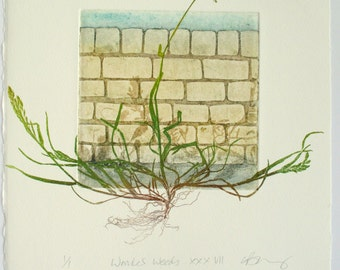 Urban Weeds. Botanical print. Collagraph with mono print