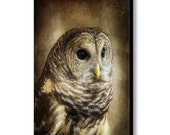 Barred Owl Rustic Woodland Nature Bird of Prey Hoot Owl Wildlife Fine Art Photo on Gallery Canvas Wrap Giclee