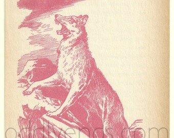 1950's Wolf Original Vintage Wolves Illustration Print