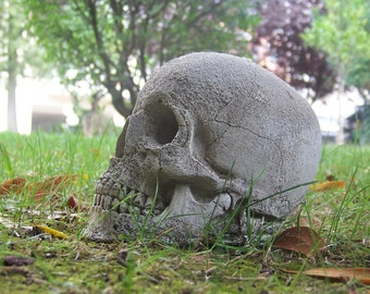Left in External Conditions - Plaster Human Skull - Natural Effects