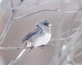 Bird photography, Junco picture, cute bird in snow photo, nature art, print or canvas, wall home decor, nursery 8x10 11x14 12x16 16x20 20x30