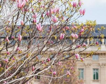 Paris Spring Photo, Paris Photography, Paris Print, Paris Decor, Home Decor, Pink Magnolias, Paris Magnolias