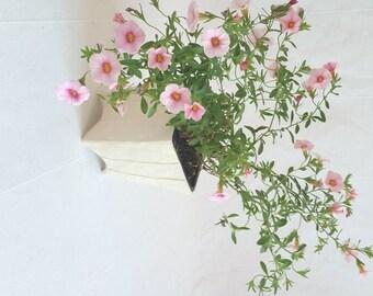 Small white planter for cactus or succulent. Square, planter. Herb pot, house plants. Minimalist, modern home decor.