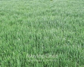 20% SALE! Green Grass Background, Outdoors Spring Party Photo Shoot Back Drop, Newborn Photography Backdrop, Green Lawn Wallpaper