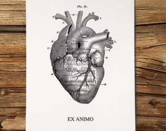 Ex animo, anatomic illustration with orchestral score