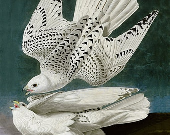 "John Audubon ""Gyrfalcon"" 1827 Reproduction Digital Print Falcons Bird Wildlife Nature Wall Hanging"