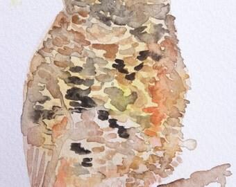 owl original watercolor