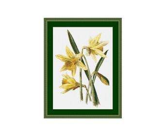 2 for 1 SALE! - Daffodil Cross Stitch Chart, Instant Digital Download Floral Cross Stitch Pattern, Narcissus Cross Stitch   (P-351)