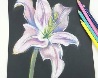 Lily on black background, original pastel by Francesca Licchelli, soft pastels on paper, gift idea for her, artistic home office decoration.