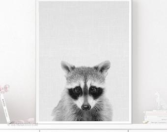 Raccoon Print, Raccoon Photo, Black and White Nursery, Peekaboo Print, Peekaboo Animal, Digital Download, Photography, Animal Photos