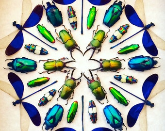 Framed insect display Kaleidoscope Real bugs Framed beetle art Best selling art Nature wall art Taxidermy Shadowbox art Preserved dried