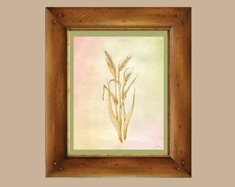 Barley Watercolor - 8x10 Vintage Botanical Inspired Art Print - Scientific Illustration, Microbrew brewery Craft Beer Original art