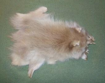Natural Blonde Raccoon Pelt Piece, unique!