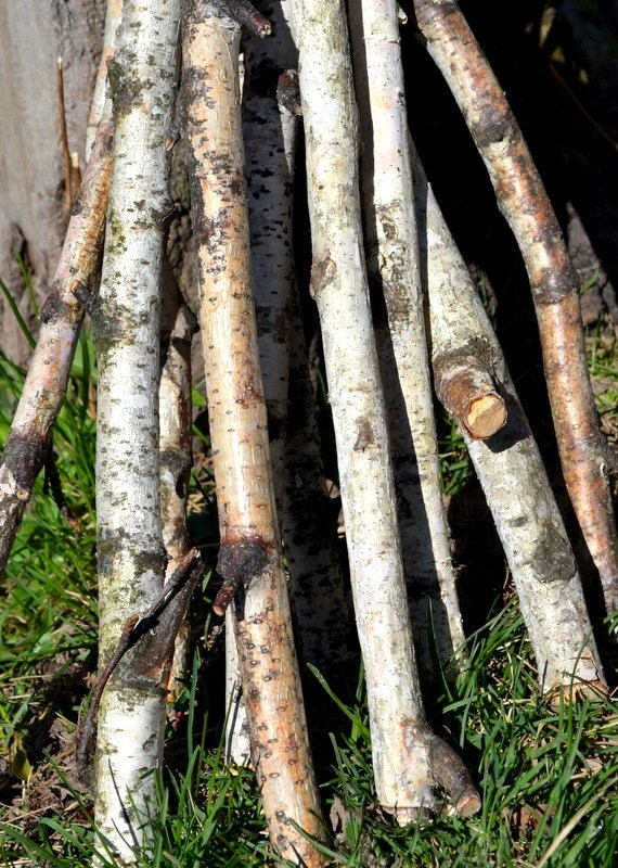 White birch tree sticks wood logs branches woodworking