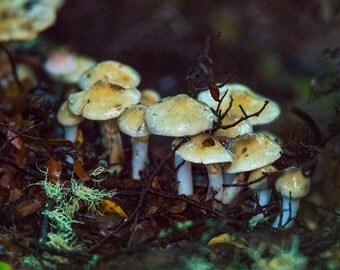 Fungi on a Nursing Log