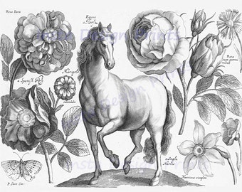 "Illustration ""Horse, Flowers, Butterfly"" 1607 Digital Download Printable Art Commercial Use Scrapbooking Printables"