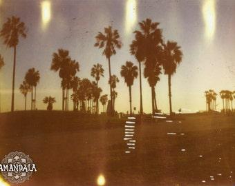 Venice Beach Palm Love photograph -digital download