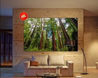 Redwoods State Park large canvas wall art decor print Sequoia Trees in Big Basin prints large prints living room wall art Office Decor