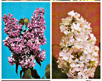 Set of 15. Soviet Postcards.   Russian Lilac. Photo Gromova. Pravda. Moscow, 1983