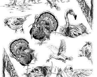 Birds digital stamps, Bird clipart, Scrapbooking stamps, Craft supplies, Transfer sheet, Peacock, Bald eagle, Flamingo, Dove, Turkey