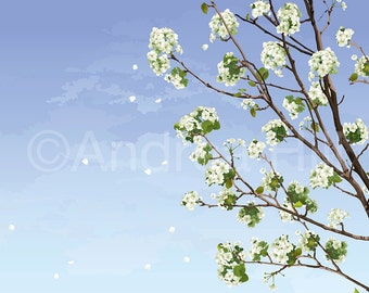 White Cherry Blossoms - Giclée Print on Photo Paper