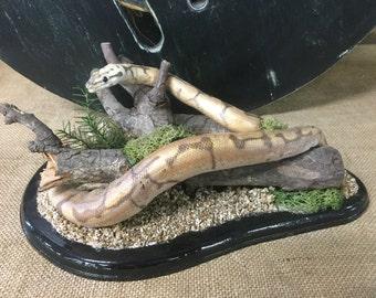 Arthur stuffed Python taxidermy snake