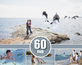 60 sea fish animals Photo Overlays, clip art, clipart, scrapbooking, photo overlay, photoshop overlays, dolphin, jellyfish, octopus