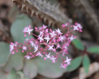 Tiny pink flower picture, flower photography, nature photography, floral photography, flower picture, pink flower, instant download, picture