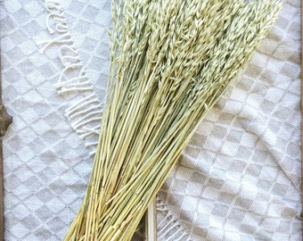 Dried Aveena Oats, Green Grains, Dry Oats, Wheat Oats, Wedding Preserved Bouquets, Bunch, DIY Home Decor, Natural Flax, Golden Pods, Flowers