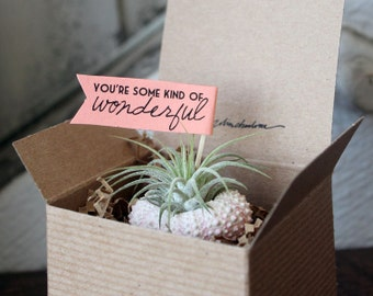 some kind of wonderful //  air plant garden