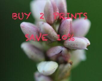 Buy 2 Prints Save 10%, Multi-print discount, Two Print Set, Home Decor, Wall Art