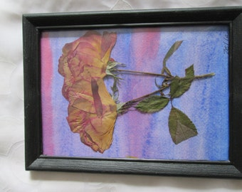 Pressed Rose on Watercolor